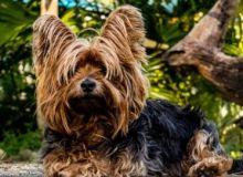 Seguro Responsabilidad Civil Perro desde 35 euros al año